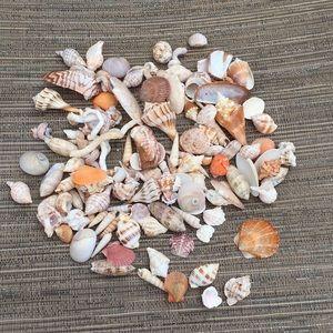 2 pounds of Florida Seashells